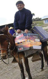 Pastor Juan uses a mule to carry Bibles to the Christian Church in Peru